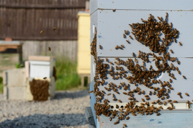 Meet A Beekeeper // www.WithTheGrains.com